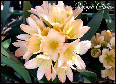 cw-best-white-pastelededl-pollen-ed