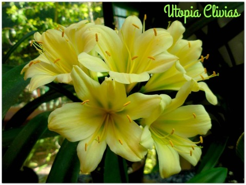 dweza-yellow-x-hirao-ededo-ed