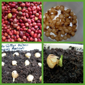 planting and growing seed