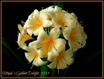 Clivia Collections of Carrie Kruger