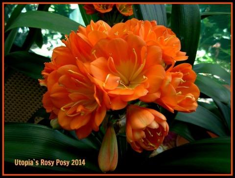 rosy-posy-eded