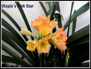 sister-star-green-001pink-star-ed
