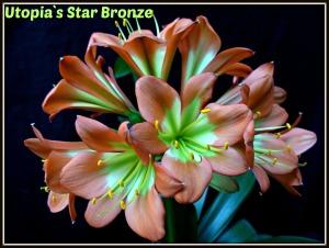 star-bronze-sibling-2ed