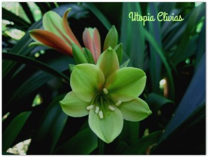 star-green-opening-edup-ed2