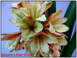the-original-star-greened