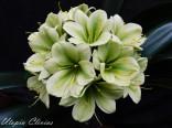 1212 Green compact (3) Zelanka