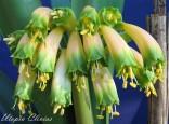 FVR Gardenii June