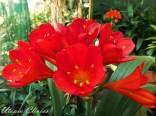 Groenrivierplaas Red